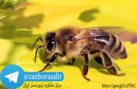 لینک گروه زنبورداری تلگرام و کانال تلگرام زنبورعسل