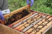 آموزش 0تا 100 پرورش زنبورعسل 02128423118-09130919448-wWw.118File.Com