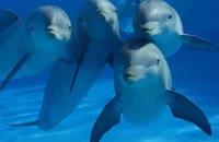 10  تا از واقعیت های جالب درباره دلفین ها