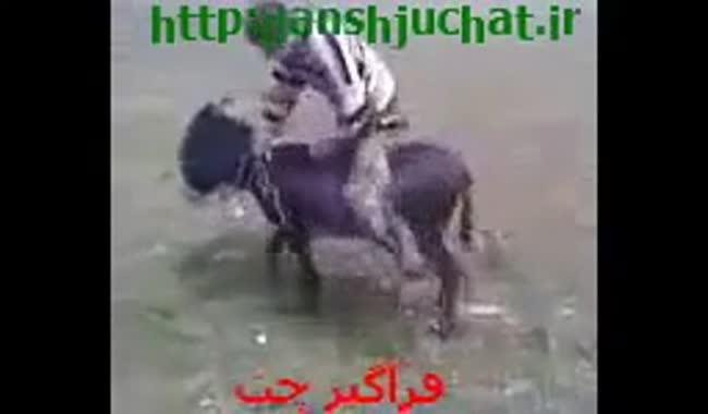 طنز خربازی به روش عربی خخخ