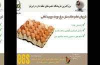 هچ موفق تخم های جوجه کشی با تخم مرغ نطفه دار درجه 1 و صد در صد نطفه دار