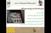 کارآفرین بودن را با خرید تخم نطفه دار مرغ آغاز کنید!