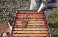 آموزش کامل مراحل زنبورداری3سوته 02128423118-09130919448-wWw.118File.Com