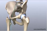 آناتومی مفصل ران چیست