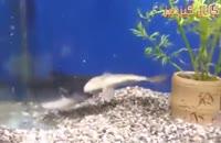 خوردن ماهی