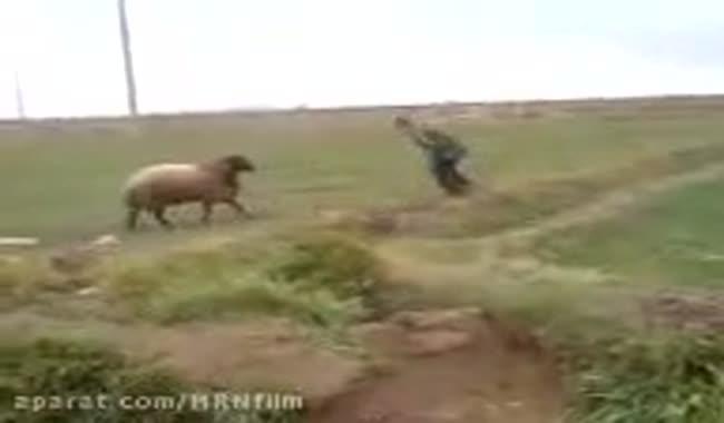 کلیپ طنز نبرد یک الاغ با یک گوسفند