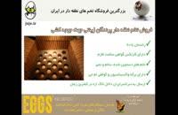 فروش تخم نطفه دار انواع پرنده زینتی، با کیفیت و سالم