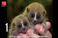 10 تا از بانمک ترین حیوانات دنیا