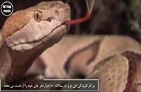۱۰ تا از کشنده ترین و خطرناک ترین موجودات زمین