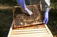 بسته آموزش صفرتاصد زنبورداری 02128423118-09130919448-wWw.118File.Com