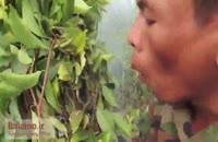 شکار عسل در جنگل