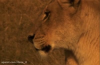 مستند آخرین شیرها - دوبله فارسی ᴴᴰ