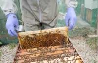 آموزش حرفه ای زنبورداری- 02128423118-09130919448-wWw.118File.Com