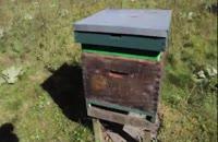 آموزش حرفه ای زنبور داری 02128423118-09130919448- wWw.118File.Com