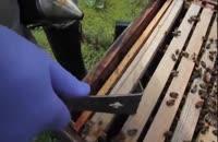 آموزش حرفه ای زنبور داری 02128423118-09130919448 - wWw.118File.Com
