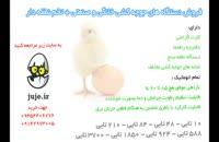 فروش تازه ترین تخم های نطفه دار مرغ و پرندگان زینتی