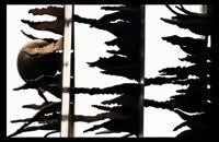 مجسمه های تهران