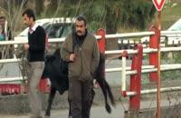 فیلم ایرانی فراری (دانلود کامل بدون سانسور)