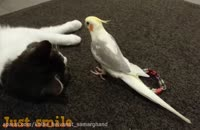 بامزه ترین طوطی های خونگی در دنیا