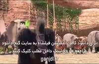 دانلود انیمیشن فیلشاه | کامل | 1080p