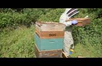 آموزش حرفه ای زنبور داری