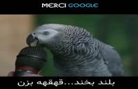 طوطی سخن گوی نابغه جهان