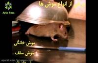 تصویری دیدنی از لحظه ورود موش به خانه