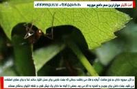 زندگی مورچه ها  در لانه هایشان!!