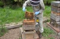 آموزش مرحله به مرحله زنبورداری 02128423118-09130919448-wWw.118File.Com