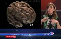 یادگیری دو زبان از نوزادی موجب انعطاف پذیری مغز می شود
