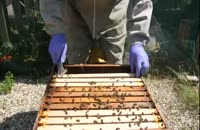 آموزش کامل وجامع پرورش زنبورعسل 02128423118-09130919448-wWw.118File.Com