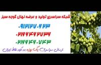 قیمت نهال گوجه سبز خوشه ای کرج 09120398417 – نهالستان گوجه سبز - قیمت خرید نهال گوجه سبز