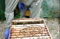 بسته کامل آموزش زنبورداری 02128423118-09130919448-wWw.118File.Com