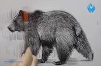 آموزش طراحی از حیوانات