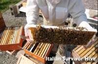 کاملترین آموزش پرورش زنبورعسل 02128423118-09130919448-wWw.118File.Com