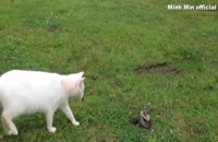 Animal Fight: Cat vs Cobra Snake