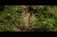 کشاورزی مورچه ها