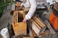 آموزش سیر تا پیاز پرورش زنبور عسل در 118file.com