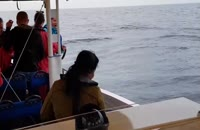 حرکت نمایشی نهنگ حین گردش توریست ها
