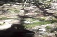 قطع درختان ممنوعالقطع شمشاد در منطقه گردشگری جنگل مهربانرود