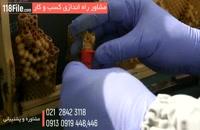 آموزش زنبورداری و پرورش زنبور عسل-www.118file.com