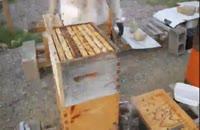 آموزش کامل زنبورداری در 118فایل 02128423118-09130919448-wWw.118File.Com