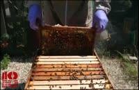 آموزش قدم به قدم پرورش زنبورعسل 02128423118-09130919448-wWw.118File.Com