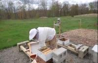 آموزش جز به جز پرورش زنبور عسل در wWw.118file.com