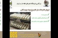 تخم نطفه دار شترمرغ - صد در صد نطفه دار و با کیفیت