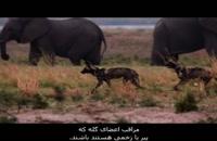 مستند خاندان ها 4 - گرگهای خالدار