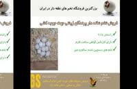 انواع تخم های نطفه دار پرندگان زینتی در juje.ir