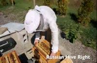بسته اموزش دقیق و جز به جز پرورش زنبور عسل در118فایل
