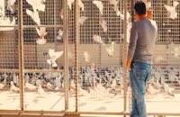 تیزر دوم ،فیلم مستند... شازده ، کبوتر بلند پرواز ایرانی