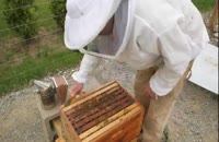 آموزش صفرتاصد پرورش زنبورعسل 02128423118-09130919448-wWw.118File.Com